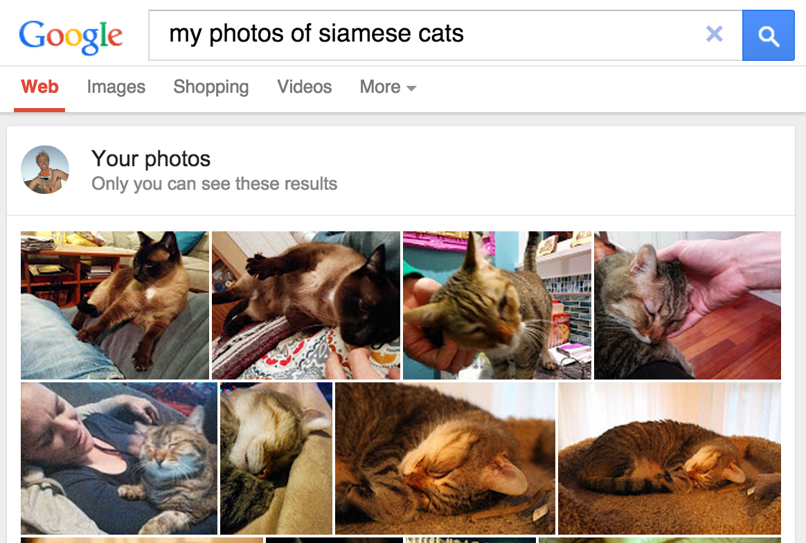 screenshot from Google Photos showing search for Siamese cats